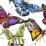 Σπάνιο άγριο έντομο πεταλούδων σε ένα ύφος watercolor Άνευ ραφής πρότυπο ανασκόπησης Σύσταση τυπωμένων υλών ταπετσαριών υφάσματος Στοκ φωτογραφίες με δικαίωμα ελεύθερης χρήσης