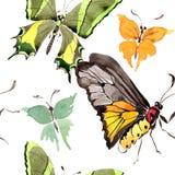 Σπάνιο άγριο έντομο πεταλούδων σε ένα ύφος watercolor Άνευ ραφής πρότυπο ανασκόπησης Σύσταση τυπωμένων υλών ταπετσαριών υφάσματος Στοκ Φωτογραφίες