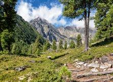 Σπάνιο δάσος κοντά στην κορυφογραμμή στοκ εικόνα