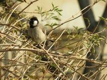 Σπάνιο Μεσο-Ανατολικό πουλί Στοκ εικόνα με δικαίωμα ελεύθερης χρήσης