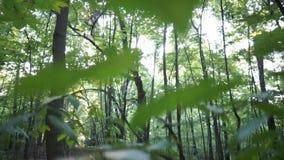Σπάσιμο ήλιων μέσω των δέντρων απόθεμα βίντεο