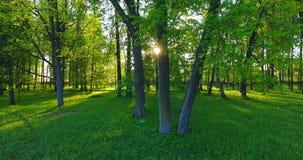 Σπάσιμο ήλιων μέσω των αποβαλλόμενων δέντρων απόθεμα βίντεο