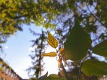 Σπάσιμο ηλιαχτίδων μέσω του φυλλώματος στοκ εικόνα με δικαίωμα ελεύθερης χρήσης
