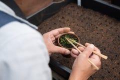 Σπέρνοντας Begonia Στοκ Φωτογραφία
