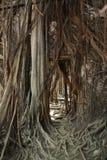 Σπίτι δέντρων Anping, Ταϊβάν - 14 Απριλίου 2015 Στοκ Φωτογραφίες