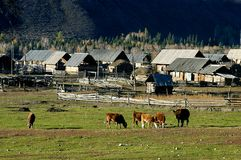 σπίτι αγελάδων χωρών Στοκ Εικόνες