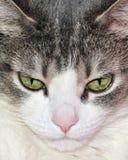 σπίτι γατών στοκ εικόνες