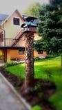 Σπίτι για τα πουλιά Στοκ Φωτογραφίες