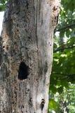 Σπίτι για την άγρια φύση Στοκ φωτογραφία με δικαίωμα ελεύθερης χρήσης