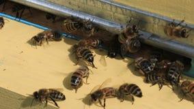 Σπίτι για τις μέλισσες απόθεμα βίντεο
