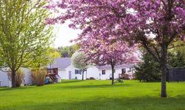 Σπίτι, δέντρο, λιβάδι στο χρόνο άνοιξη στην Αμερική Στοκ φωτογραφίες με δικαίωμα ελεύθερης χρήσης