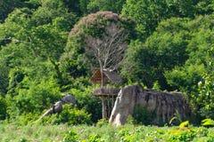 Σπίτι δέντρων στους βράχους και ένας όμορφος ουρανός σε Chaiyaphum στοκ εικόνες