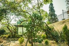 Σπίτι κάκτων με το διάφορο τύπο κάκτου στο τροπικό νησί στο bogor Ινδονησ στοκ εικόνες με δικαίωμα ελεύθερης χρήσης