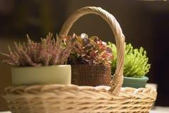 σπίτι κήπων λίγα Στοκ φωτογραφία με δικαίωμα ελεύθερης χρήσης