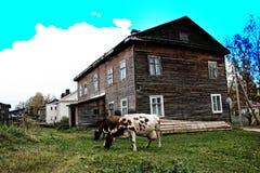 Σπίτι και αγελάδες στην επαρχιακή ρωσική πόλη στοκ φωτογραφία με δικαίωμα ελεύθερης χρήσης