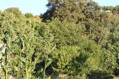 σπίτι και κήπος στο collo στοκ φωτογραφία με δικαίωμα ελεύθερης χρήσης