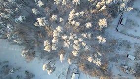 Σπίτι κοντά στα δασικά δέντρα και στέγη στο χιόνι Μετά από τις χιονοπτώσεις εναέρια όψη απόθεμα βίντεο