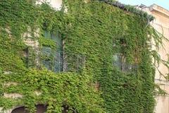 Σπίτι με τον κισσό, νότος της Γαλλίας Στοκ Εικόνες