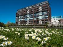 Σπίτι με το λιβάδι μαργαριτών Στοκ φωτογραφίες με δικαίωμα ελεύθερης χρήσης