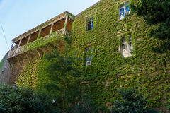 Σπίτι με το μπαλκόνι, άγρια σταφύλια στην παλαιά πόλη Γεωργία Tbilisi Στοκ φωτογραφίες με δικαίωμα ελεύθερης χρήσης