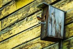 Σπίτι πουλιών με τη συνεδρίαση πουλιών στον πόλο Στοκ Εικόνες