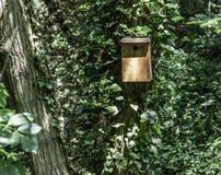 Σπίτι πουλιών σε ένα δέντρο στοκ φωτογραφία με δικαίωμα ελεύθερης χρήσης