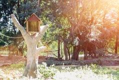 Σπίτι πουλιών από το ξύλο στο δέντρο με το φως φλογών φακών Στοκ Εικόνες