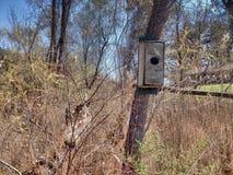 Σπίτι πουλιών σε ένα δέντρο στα ξύλα Στοκ Φωτογραφία