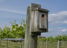 Σπίτι πουλιών στον αμπελώνα Στοκ φωτογραφία με δικαίωμα ελεύθερης χρήσης