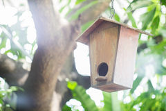 Σπίτι πουλιών στο δέντρο Στοκ Εικόνες