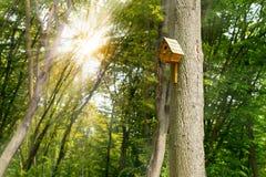 Σπίτι πουλιών στο ψηλό δέντρο στο δάσος Στοκ Φωτογραφίες