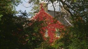 Σπίτι που καλύπτεται από τα κόκκινα λουλούδια απόθεμα βίντεο