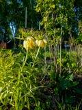 Σπίτι που ρίχνεται στη χώρα Στοκ Εικόνες