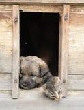 σπίτι σκυλιών γατών Στοκ φωτογραφίες με δικαίωμα ελεύθερης χρήσης