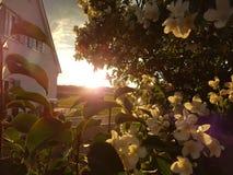 Σπίτι στον ήλιο Στοκ εικόνες με δικαίωμα ελεύθερης χρήσης
