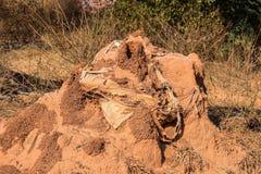 Σπίτι φιδιών φιαγμένο επάνω από κόκκινη χρωματισμένη λάσπη ή χώμα στοκ φωτογραφία
