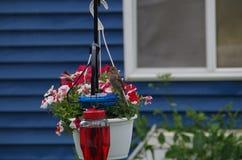 Σπίτι-Finch στοκ εικόνες με δικαίωμα ελεύθερης χρήσης