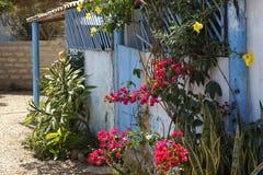 Σπίτι Flowerful Στοκ Εικόνες