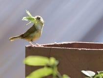Σπίτι Wren με Grasshopper στοκ φωτογραφίες με δικαίωμα ελεύθερης χρήσης