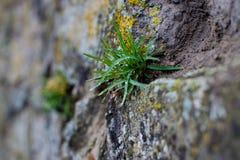 Σπασίματα νεαρών βλαστών μέσω της πέτρας Στοκ Εικόνα