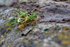 Σπασίματα νεαρών βλαστών μέσω της πέτρας Στοκ εικόνες με δικαίωμα ελεύθερης χρήσης