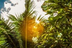 Σπασίματα φωτός του ήλιου μέσω των φύλλων φοινικών στοκ εικόνες