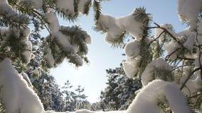 Σπασίματα χειμερινών ήλιων μέσω των χιονισμένων κλάδων έλατου Στοκ Εικόνα