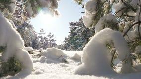 Σπασίματα χειμερινών ήλιων μέσω των χιονισμένων κλάδων έλατου Στοκ Φωτογραφία