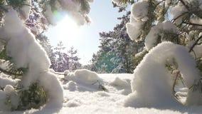 Σπασίματα χειμερινών ήλιων μέσω των χιονισμένων κλάδων έλατου Στοκ φωτογραφία με δικαίωμα ελεύθερης χρήσης