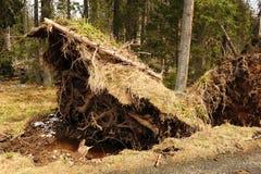 Σπασμένα δέντρα Στοκ εικόνα με δικαίωμα ελεύθερης χρήσης