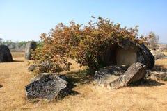 Σπασμένα βάζα που καλύπτονται εν μέρει με το δέντρο στοκ φωτογραφίες