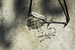 σπασμένα γυαλιά στην άσφαλτο Στοκ Εικόνες
