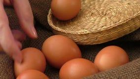 σπασμένα κιβώτιο αυγά αυγών κοτόπουλου μέσα στο λέκιθο απόθεμα βίντεο