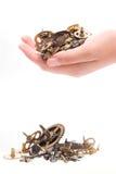 σπασμένα μέρη ρολογιών μικρ Στοκ φωτογραφία με δικαίωμα ελεύθερης χρήσης